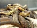 Fobia a las serpientes
